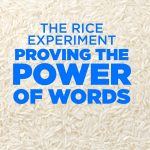 The Rice Experiment Proving the Power of Words